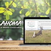 Go Outdoors Oklahoma on laptop